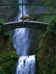 CrossingtheWaterfall