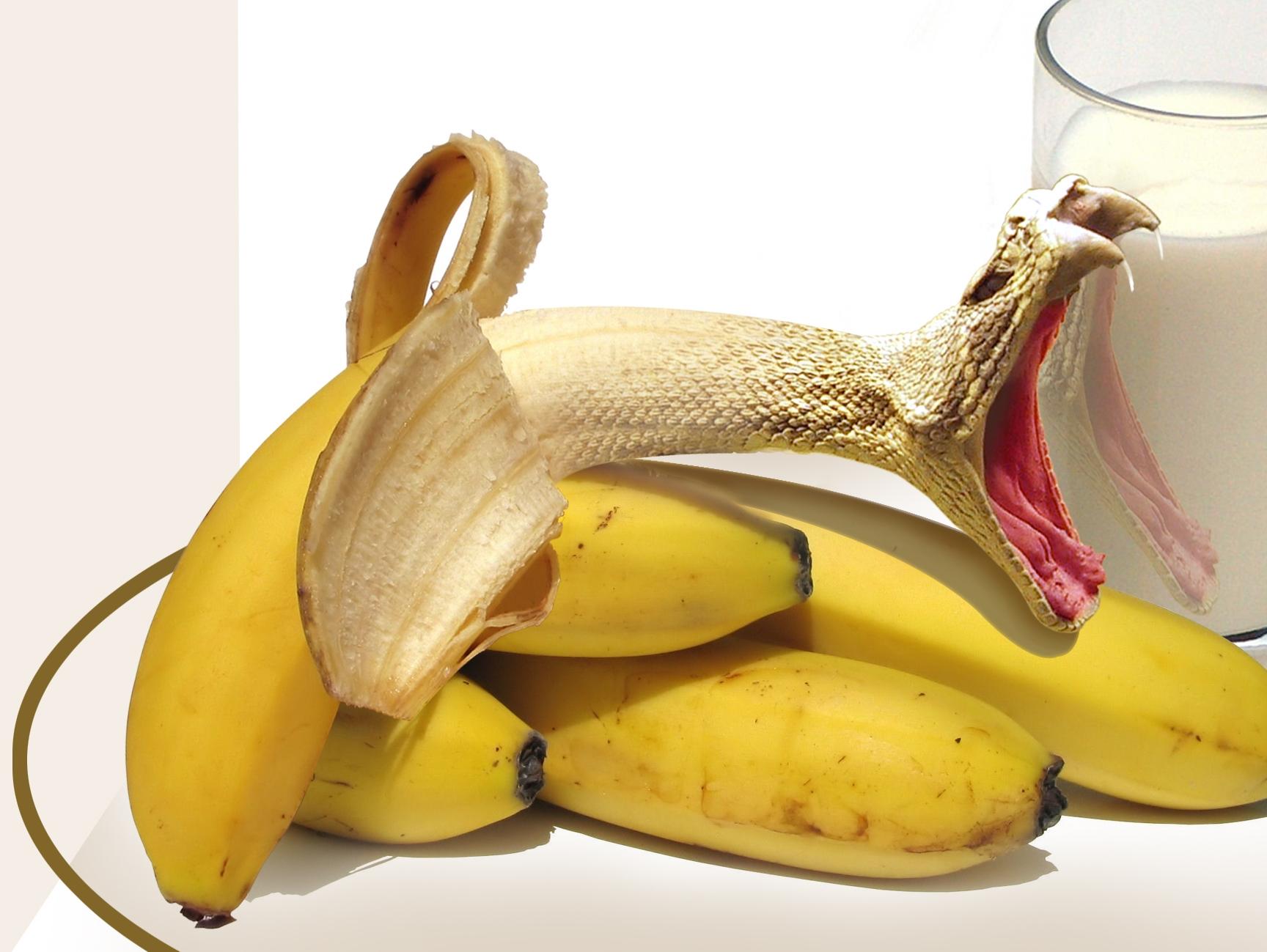 Animal Fruit Photoshop...