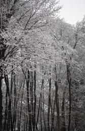 winterBampW