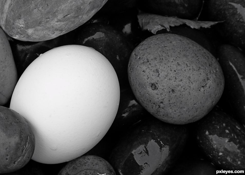 An Egg in the Quarry