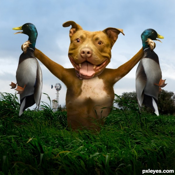 Duck Hunt photoshop picture)