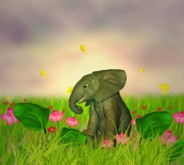 elephant in garden Picture