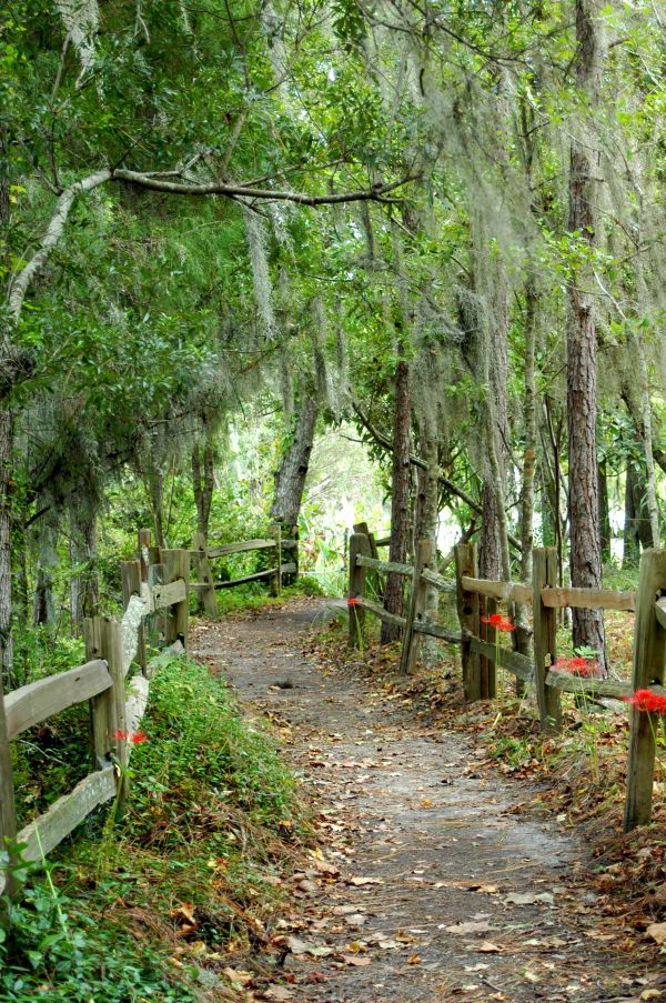 Trail at Audubon Swamp