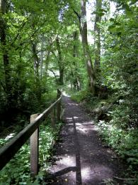 Woodland path Picture