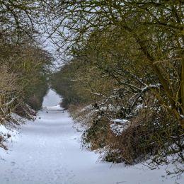 SnowyPath