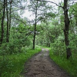 Leteaforest