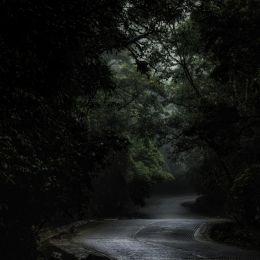 Crossingtheforest