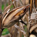 end of the season photoshop contest