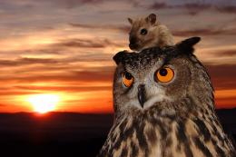 the owl and the mouse