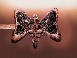 entangledbutterfly
