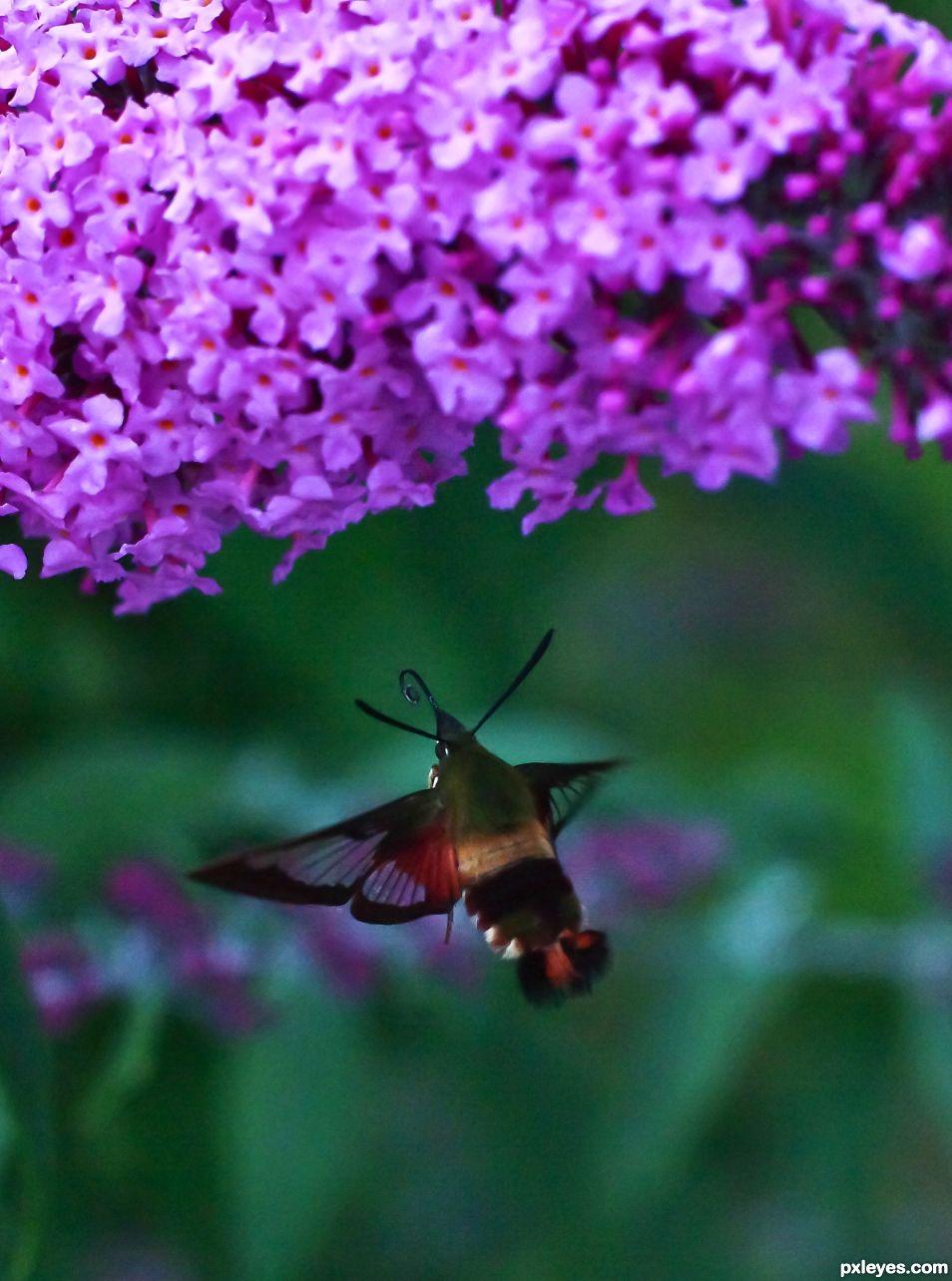 Like a Bumblebee?