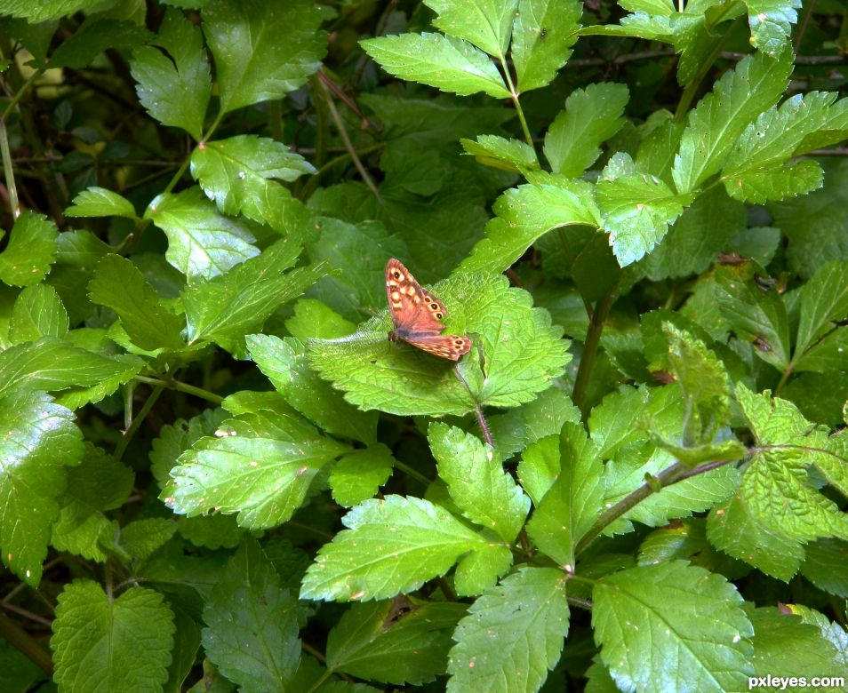 Colourful Butterfly on green leaves