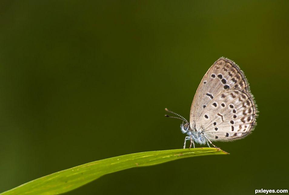 Tiny Grass Blue!