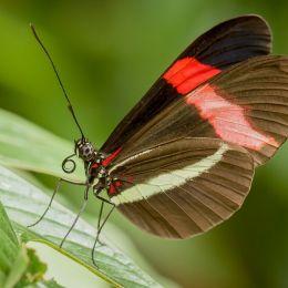 butterflyposing