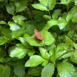 ColourfulButterflyongreenleaves