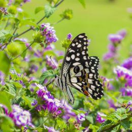 Butterfliesareselfpropelledflowers