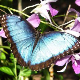 bluemorpho