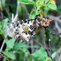 Butterflyonherlastdays