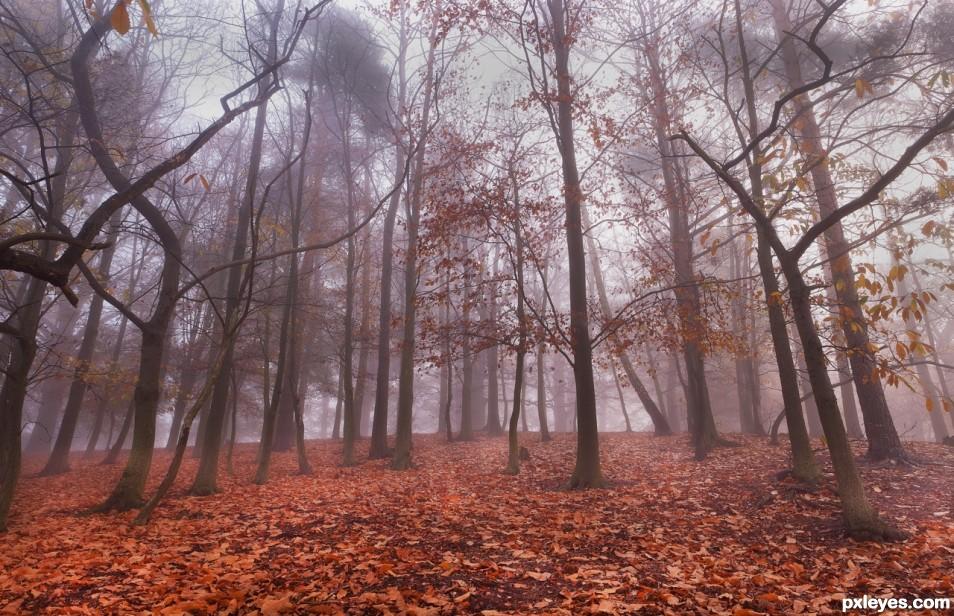 November Rust