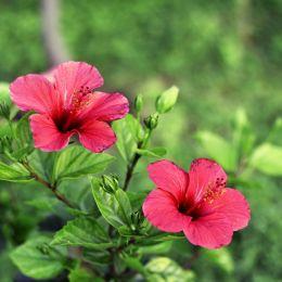 FlowerSeason
