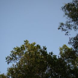 Blue sky in Autumn Picture