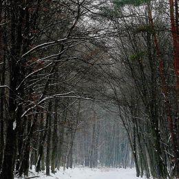 winterarch
