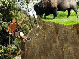 Alpinism with ... bison