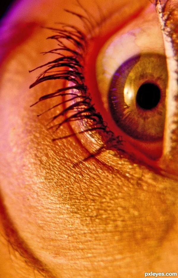 Purple Fleck & The Golden SunrEyes