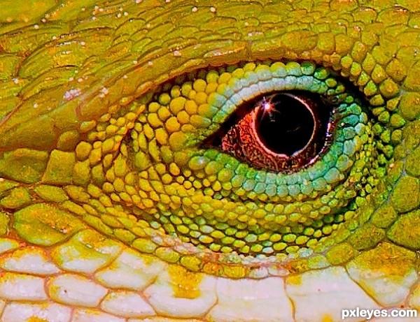 Lizard eye