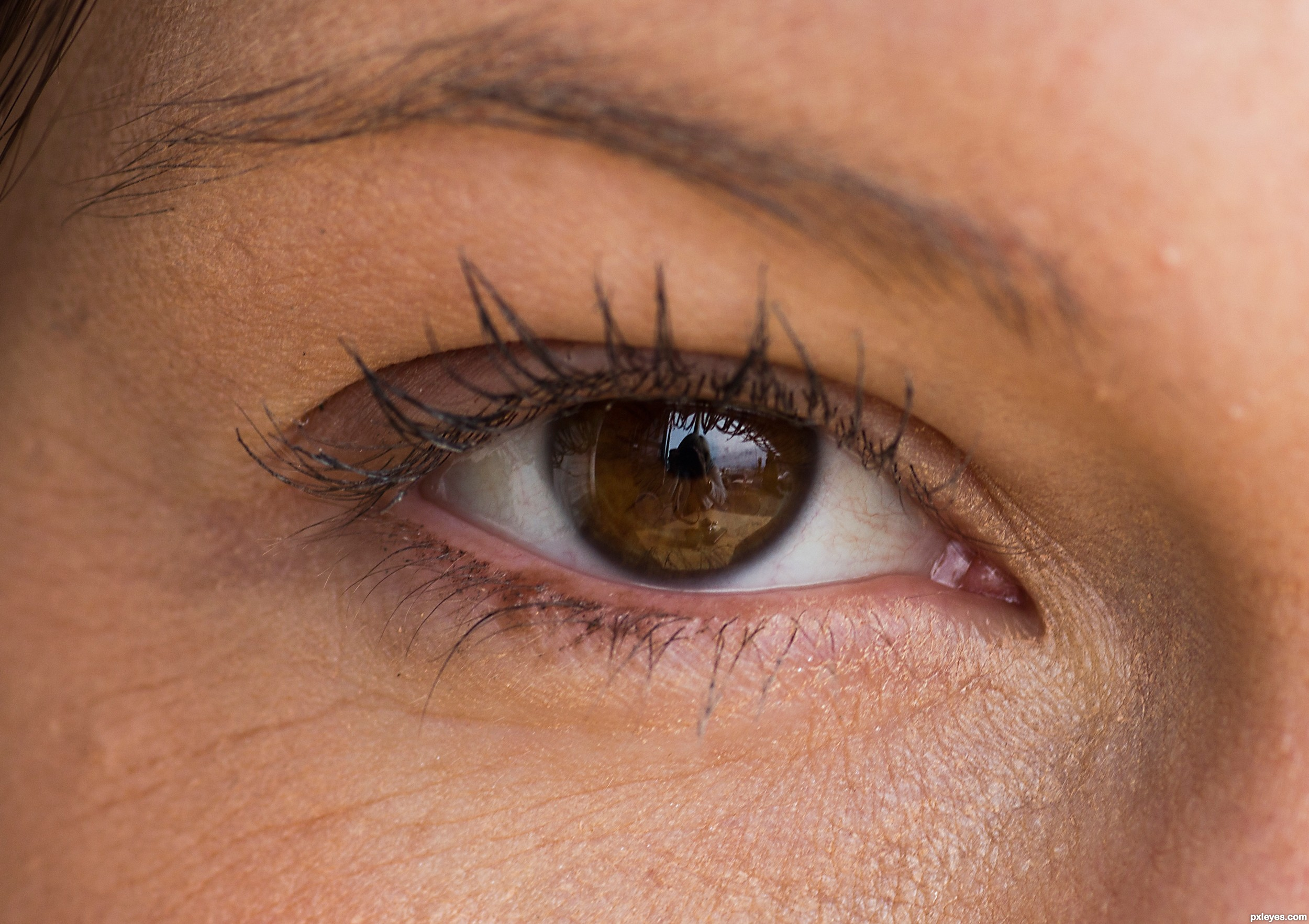 Brown Eye Close Up Stock Images, Royalty-Free Images ...