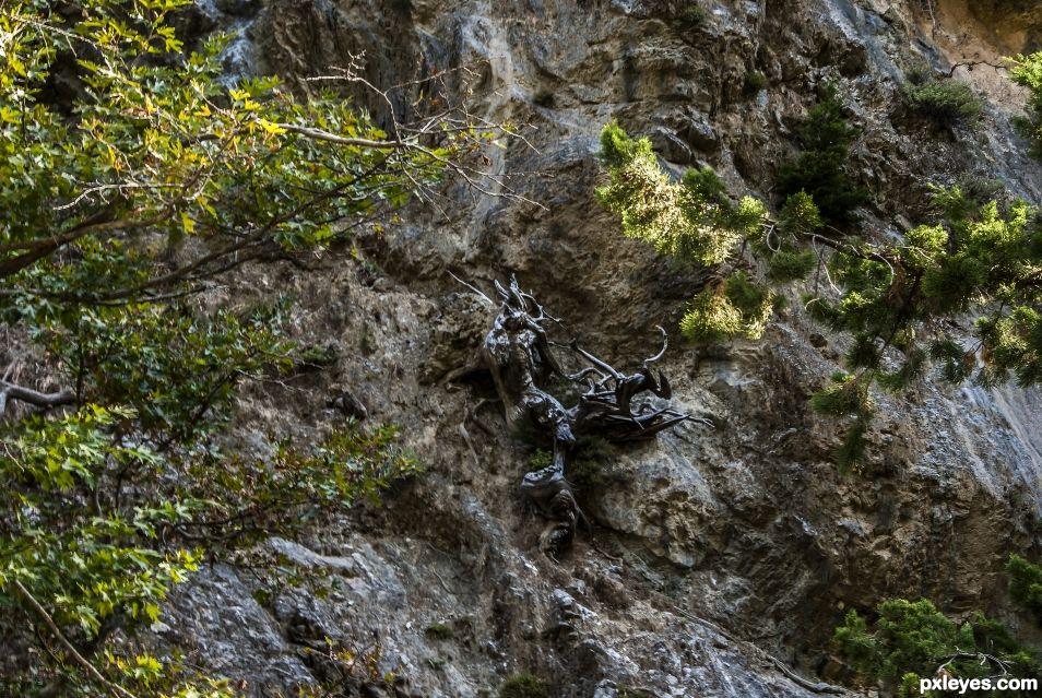 Creatures Climbing