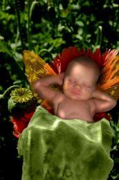 NappingFairy