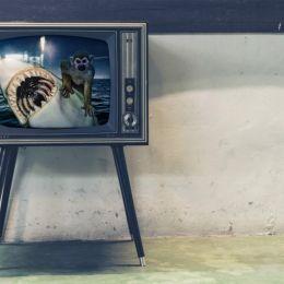 TheHeartofaMonkeyonTV