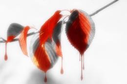 Leaves loosing color