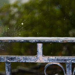 Rainingnow
