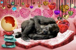 Gorilla Heart Sleep Bed