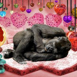 GorillaHeartSleepBed