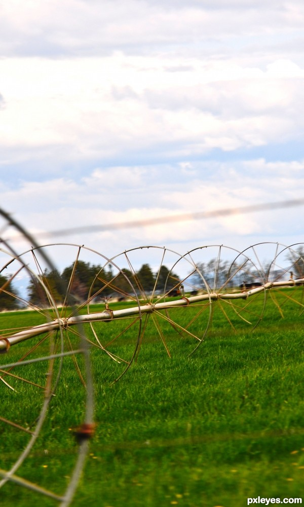 Farmland symmetry