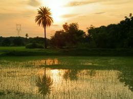 Waterloggedfarm