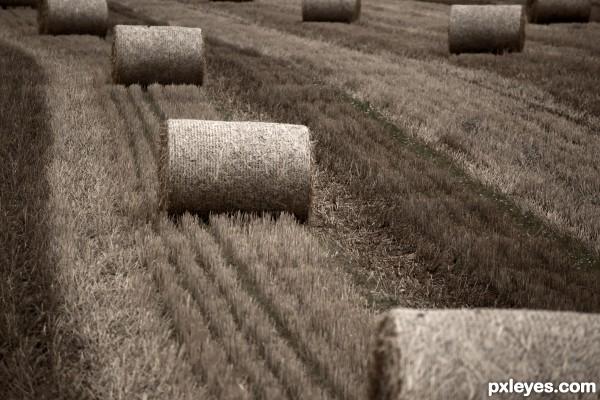 silence of hay