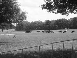 Lone Mule Picture