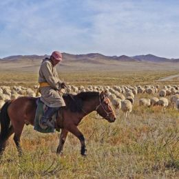 SheepCountry