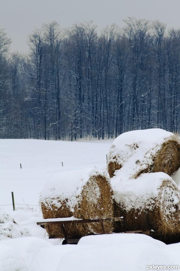 January Farmland