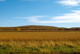 Autumnfield