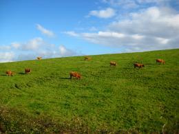 Cowfarm