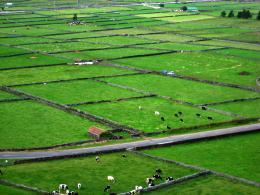 Milkcowfarm
