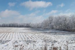 winterfield