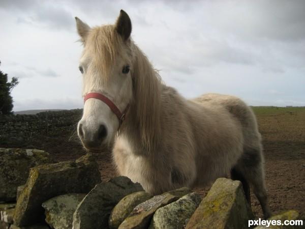 A horse, a horse....