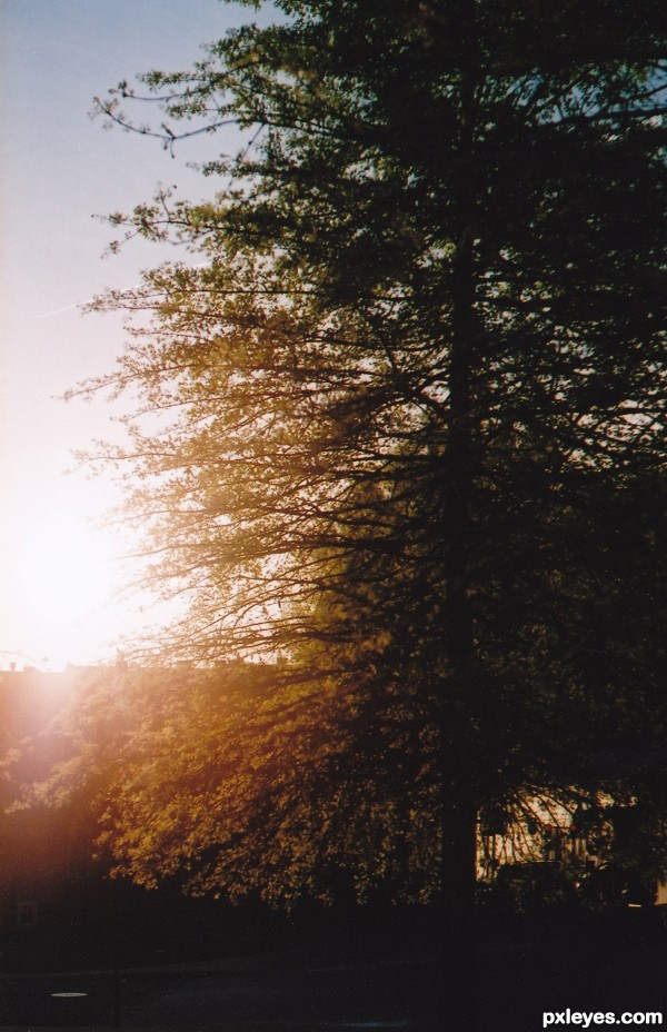 Turn to the Sun