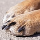 feet claws and paws photography contest